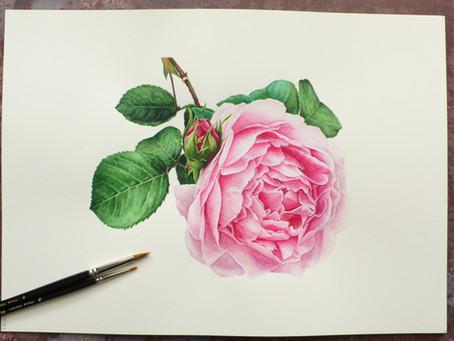 Anna Mason: Rose Constance Spry
