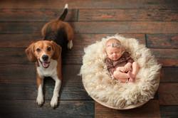 фотосессия newborn с дом. питомцами