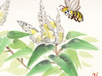 ハチ博士のミツバチコラム(37)女王バチ
