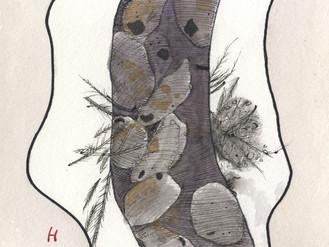 ハチ博士のミツバチコラム(41)アカリンダニ ①