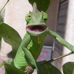 smile_chameleon.jpg