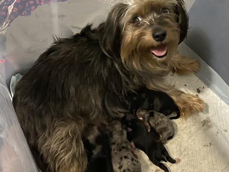 Puppy update!