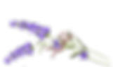 Bethany Rae Final Logo 2 Lavender.png