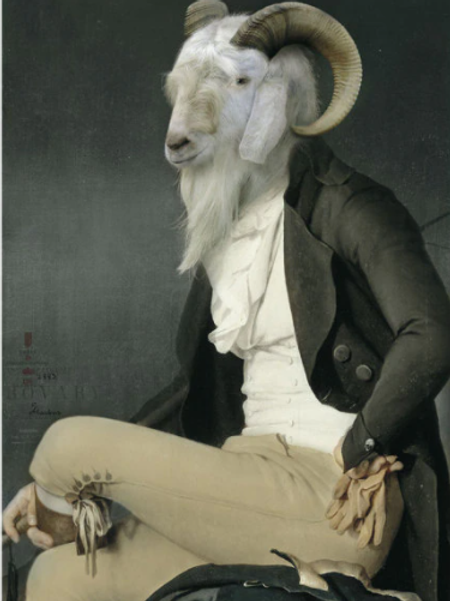 Canvas Wall Art Picture - Goat