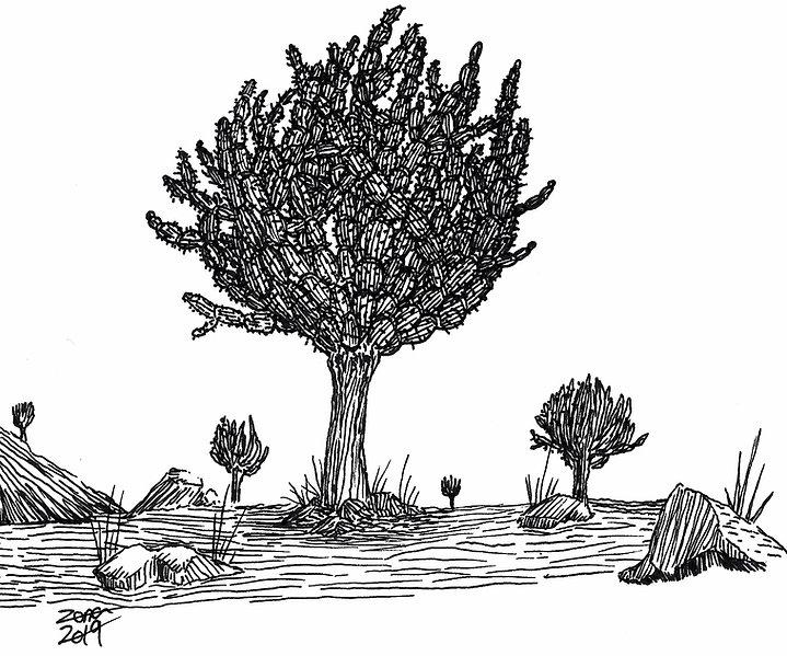 Cactus_tree_scene.jpg