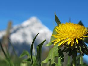 Lever du bevidst? / Do you live consciously?
