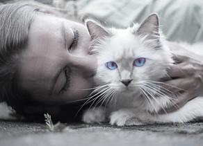 Sørg bare over din kat