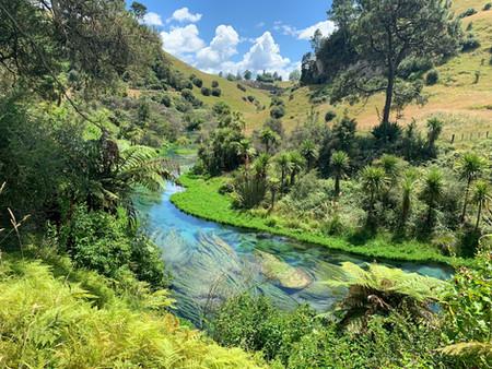 쥐라기 공원에 온 듯한 푸타루루의 '블루스프링'