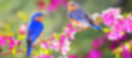 229-2298147_spring-flowers-and-birds_edi