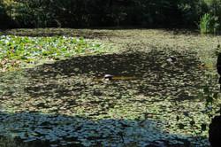 Parco Bosco Motto Grande