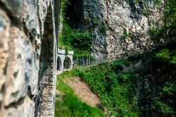 Sentiero olivo Gandria_2