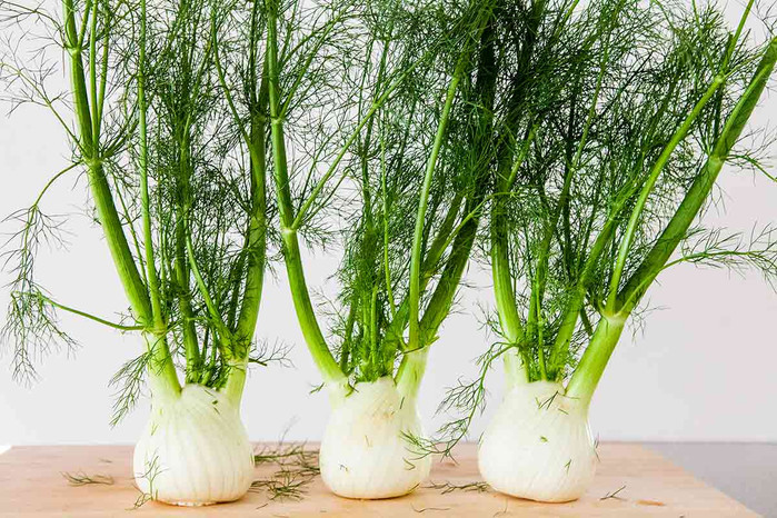 Fennel: Our New Discovery