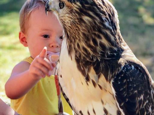 L'enfant et l'oiseau