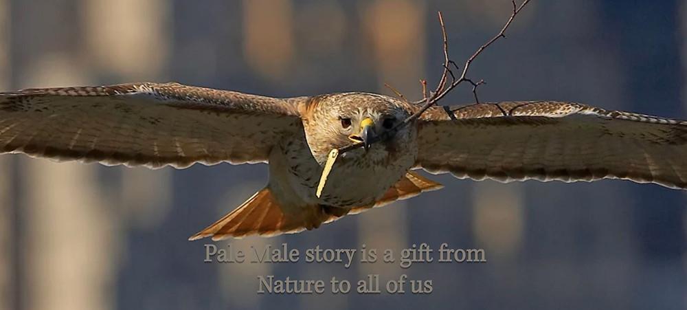 Image tirée du film La légende de Pale Male