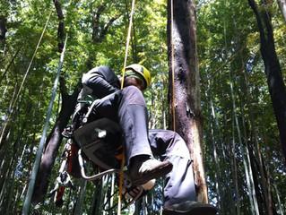 小型林業機械の世界
