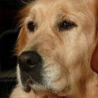 Pet Funeral Celebrant Helen Churchill