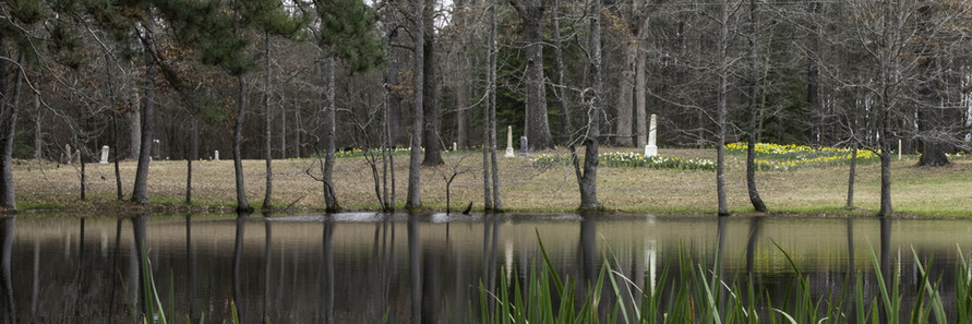View of the cemetery from the pond.