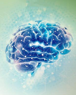 cervell.PNG