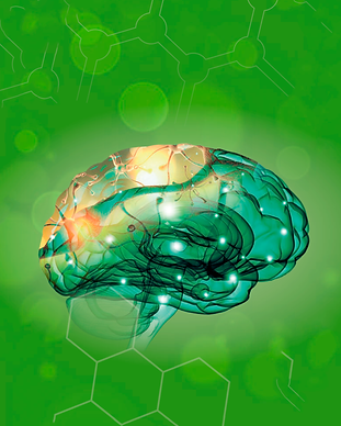 cervell2.PNG