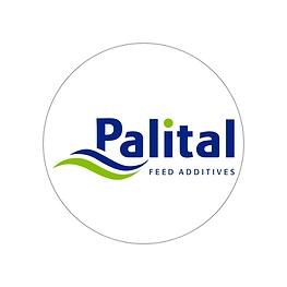 palital.png