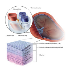 Amniotic Histology