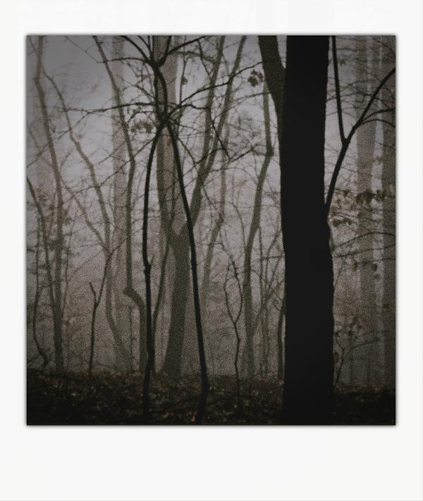 Nihil Admirari Slenderman Forest 1.png