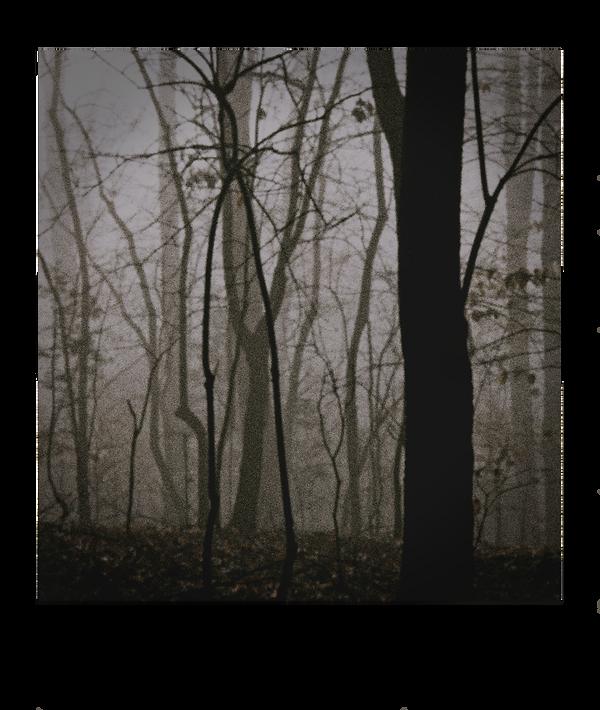 Nihil Admirari Slenderman Forest.png