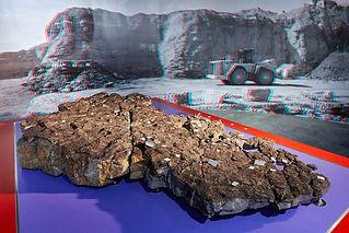 nmbe-5sterne-fossilienplatte.jpg