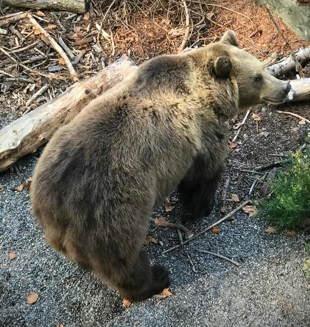 Bären im Glück