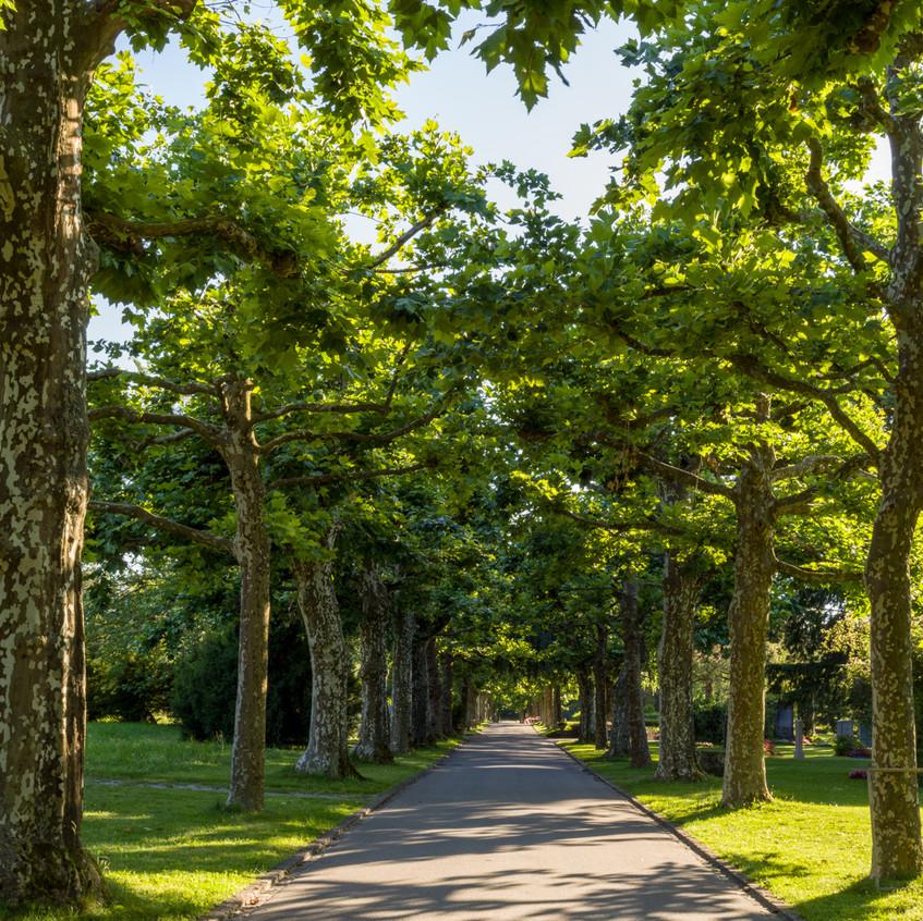 Bremgartenfriedhof©remoeisner-0001816