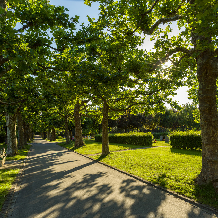 Bremgartenfriedhof©remoeisner-0001836