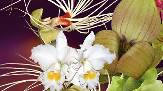 Orchideen verzaubern Bern (mit Tipps für die Orchideenhaltung)