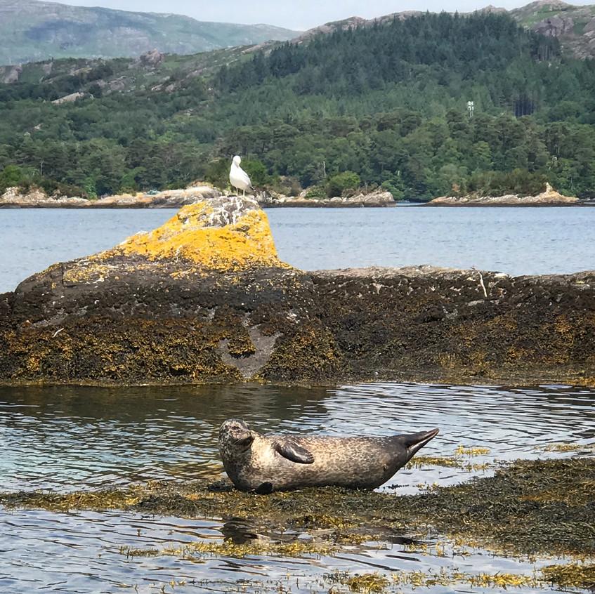 Seehunde aalen sich an der Sonne