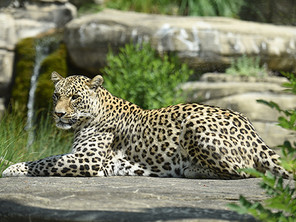 Nöis usem Tierpark