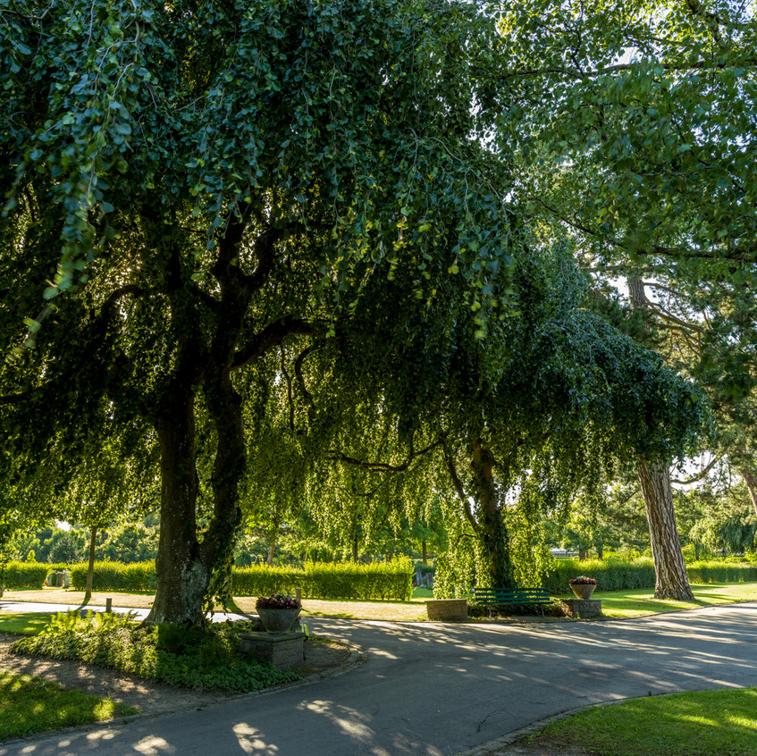 Bremgartenfriedhof©remoeisner-0001795