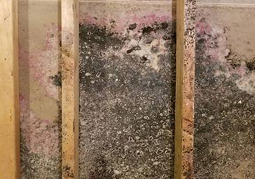 moldy drywall868