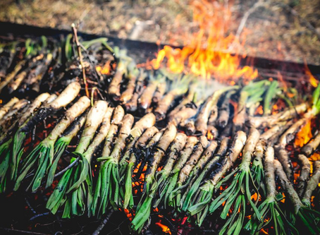 Calçots have arrived at the Old Bakery