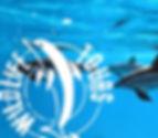 WildlifeTour, Sarasota Dolphin Tour, Siesta Key dolphin tour,