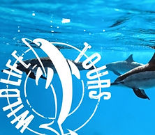 sarasota, siesta, charter, guide, captain, fishing, inshore, sunset, cruise, trip, dolphin, wildlife, sandba
