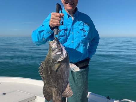 COLD FRONTS bring in BIG TRIPLETAIL!