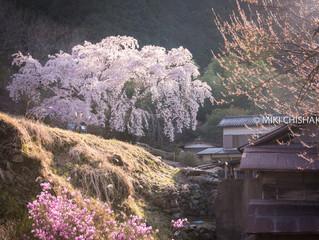 Satoyama@suburb of Tokyo