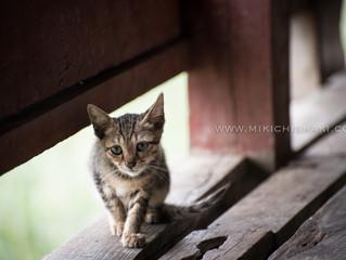 Cat temple @ Myanmar