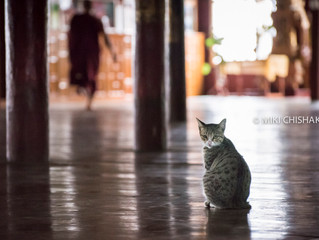 Cat temple, Nga Phe Kyaung