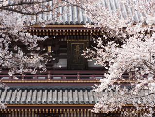 Spring has come in Tokyo