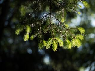 The season of fresh green