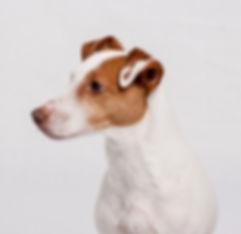 Hund Porträt