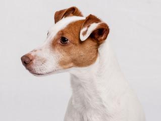 Gibt es Welpenschutz bei Hunden?