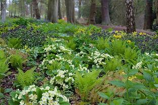 Woodland-garden-Trentham-Nigel-Dunnett (