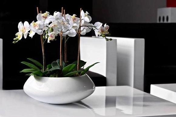 4 orchids + Vase