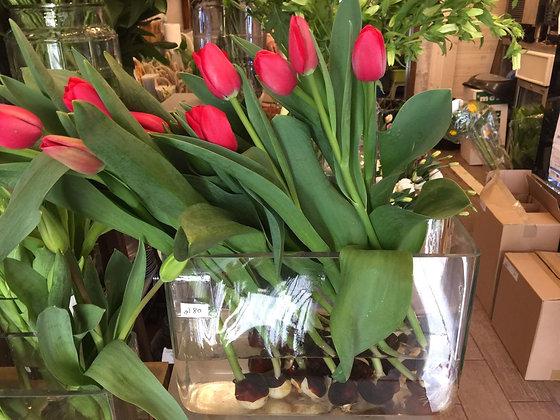 Arrangement : Tulip